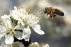 white-bee