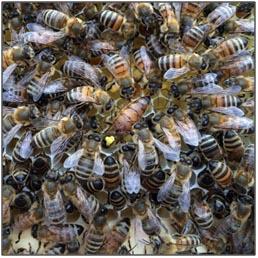 Help Mijn Bijen Zwermen